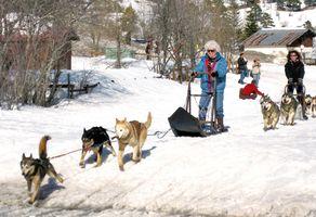 Réveillon trappeur : chiens de traineaux et raquettes