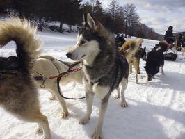 Week-end chiens de traineaux et raquettes