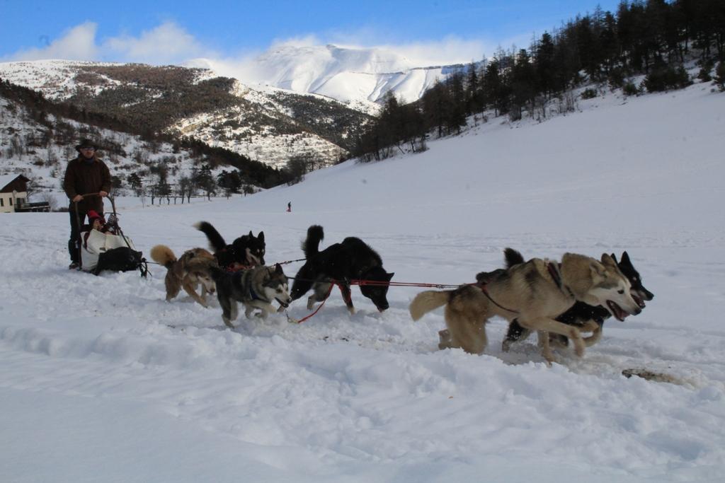 chiens de traineaux et raquettes ARGOS RANDO
